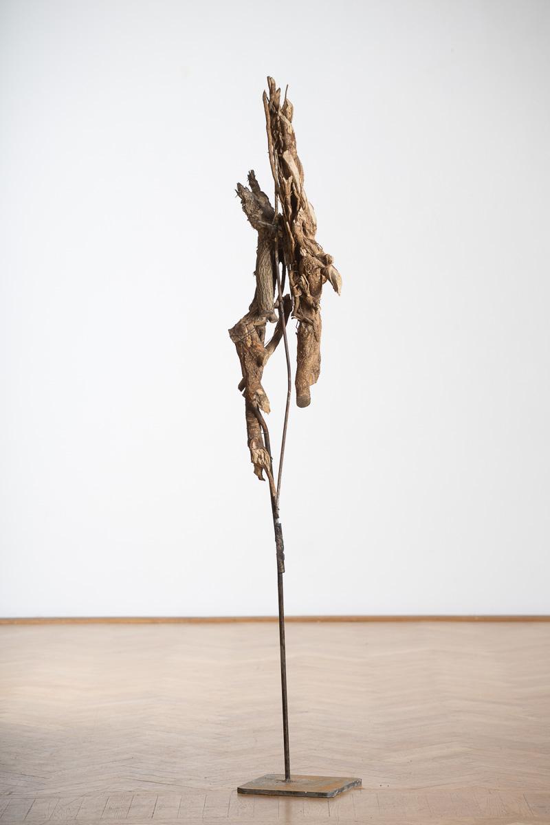 Daphne 3, iron, wood, 225 cm x 35 cm x 32 cm, 2014. photo: Walter Wetzler